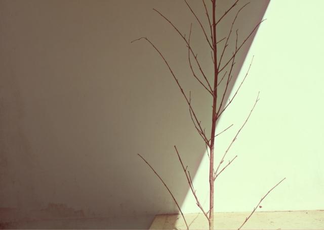 luzPrimavera2013.jpg