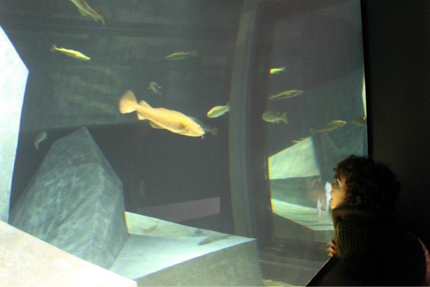 AquarioBacalhaus2.jpg