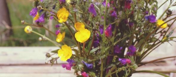 cropped-primavera2.jpg