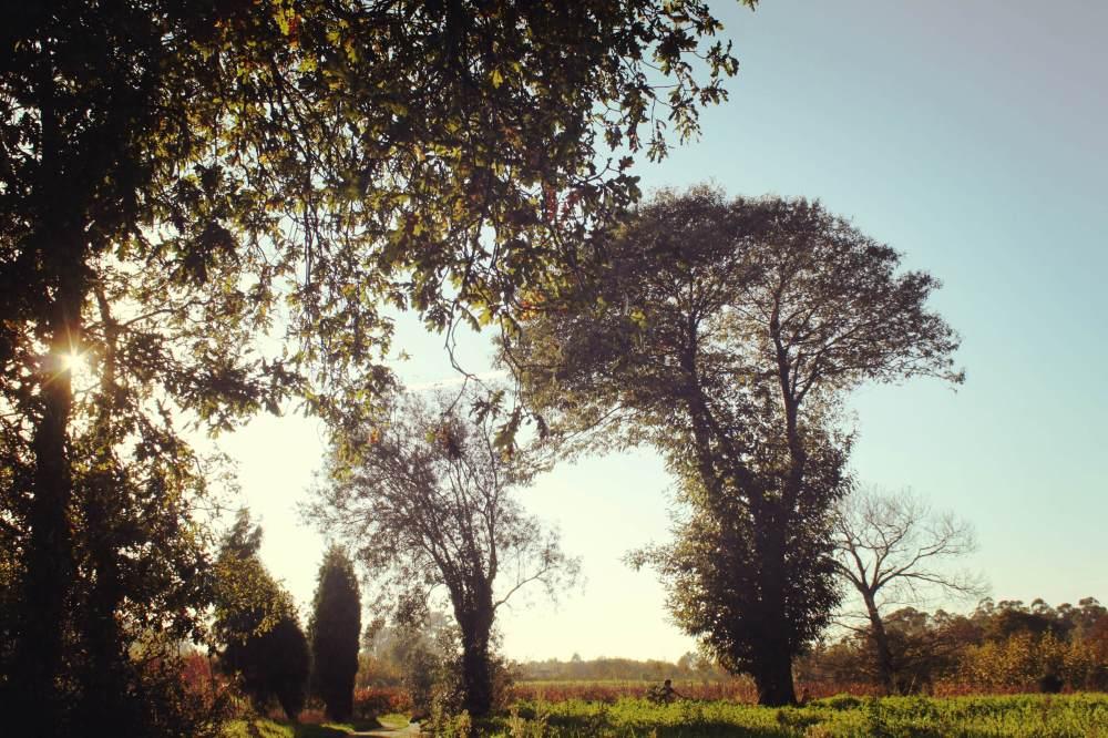 ParquePalhaca_nov15_10